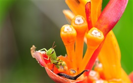 Orange flower, insect