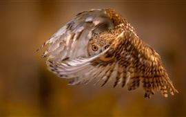 Vôo de coruja, asas, olho