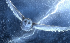 Owl flying, water drops