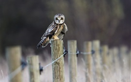 Preview wallpaper Owl standing on fence
