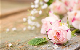 Pink flowers, roses, petals, blurry background