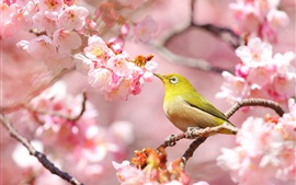 Preview wallpaper Pink flowers, sakura, bird
