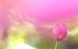 Preview wallpaper Pink lotus flower, blurry background