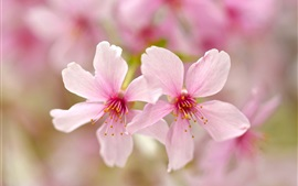 Preview wallpaper Pink petals flowers close-up, bokeh, spring