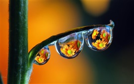 Plantas de caule, gotas de água, reflexão, flores