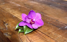 Preview wallpaper Purple orchid flowers, wood board
