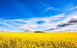 Preview wallpaper Rapeseed flowers field, beautiful scenery