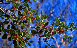 Bagas vermelhas, galhos de árvores, folhas, bokeh
