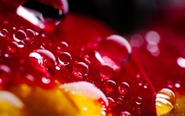 Red leaf, water drops, bright