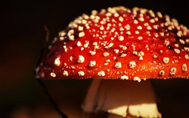 Preview wallpaper Red mushrooms close-up