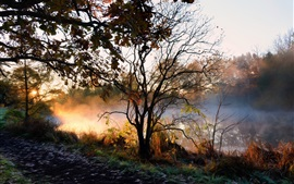 River, trees, fog, morning, autumn