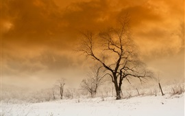 Snow, trees, winter, dusk