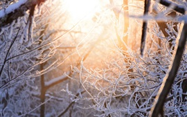Snow, twigs, forest, glare, winter