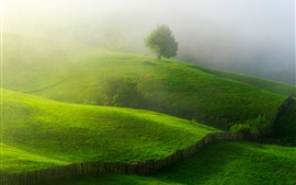 Spring, greens, hills, trees, fence