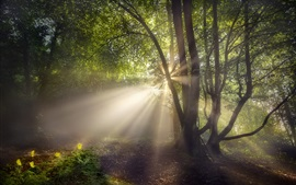 Preview wallpaper Summer, forest, sun rays