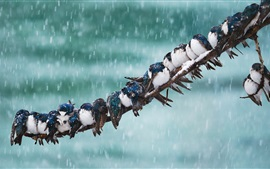 Preview wallpaper Swallow, birds, tree branch, snow