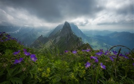 Switzerland, Appenzell Alps, flowers, mountains, clouds, fog