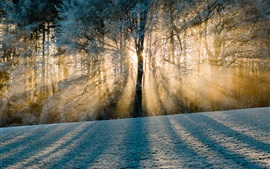 Preview wallpaper Switzerland, shadows, forest, trees, snow, sun rays