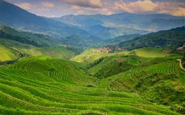 Terraces, greens, mountains, valley, fog