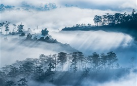 Preview wallpaper Trees, mountains, village, fog, morning