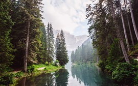 Trees, river, mountain, clouds