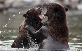 Deux ours ludiques dans l'eau