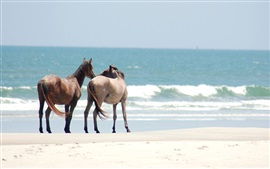Two horses, beach, sea