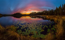 Water lilies, lake, sunset, trees