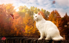 Gato blanco, ojos amarillos, otoño