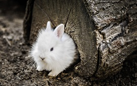 Preview wallpaper White rabbit, tree trunk