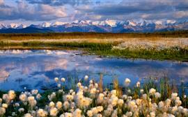 Flores selvagens, lago, montanhas, nuvens