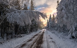 Winter, trees, road, snow