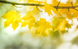 Preview wallpaper Yellow maple leaves, twigs, bokeh, autumn