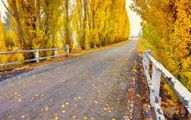 Preview wallpaper Autumn, road, trees, yellow leaves, nature