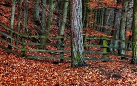 Осень, деревья, забор, красные листья