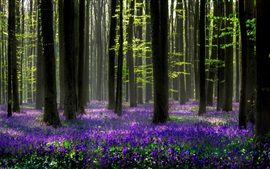 Preview wallpaper Beautiful forest, blue flowers