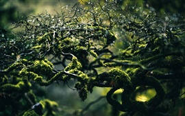 Branches, moss, water drops