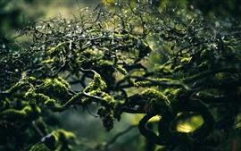 Ветви, мох, капли воды