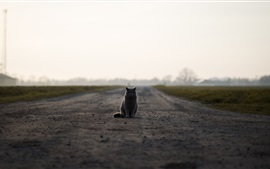 British cat sit on ground