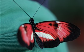 Butterfly, cloth
