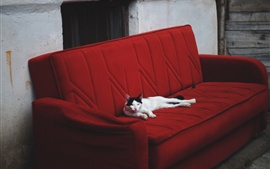 Preview wallpaper Cat rest on sofa