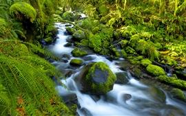 Angra, pedras, musgo, floresta, verde