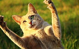 Preview wallpaper Cute cat lift paws up, sunshine, funny animals