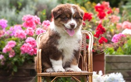 Preview wallpaper Cute dog sit on chair, flowers background