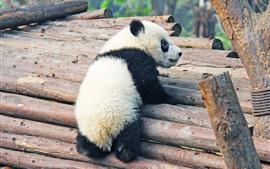 Lindo cachorro de panda
