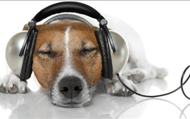 Dog relax to listen music, headphones, funny animals