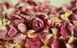 Preview wallpaper Dry rose, pink flowers, petals