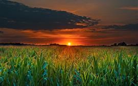 Aperçu fond d'écran Champ, coucher de soleil, nuages, crépuscule