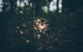 Fireworks, sparks, grass, night