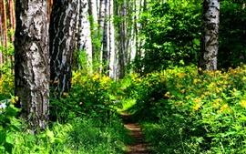 Floresta, arbustos, flores silvestres